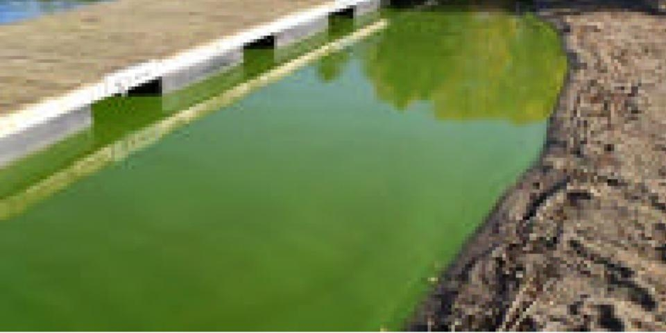 Vi frågar om utsläpp i Grindsjön! Vattnet i Grindsjön är nu helt grönt. Enligt vad vi erfar är orsaken att FOI har släppt ut 12 gånger mer fosfat än vad som är tillåtet.