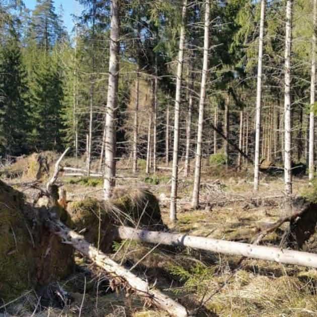 2019-03-29 - Ärende angående vår kommuns skötsel av skogsmark - Vi vill att stormskadat virke snarast forslas bort, att avtal med entreprenör(er) ses över och att en handlingsplan för vår skog utarbetas.
