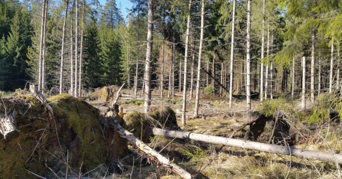 Ärende angående vår kommuns skötsel av skogsmark Vi vill att stormskadat virke snarast forslas bort, att avtal med entreprenör(er) ses över och att en handlingsplan för vår skog utarbetas.