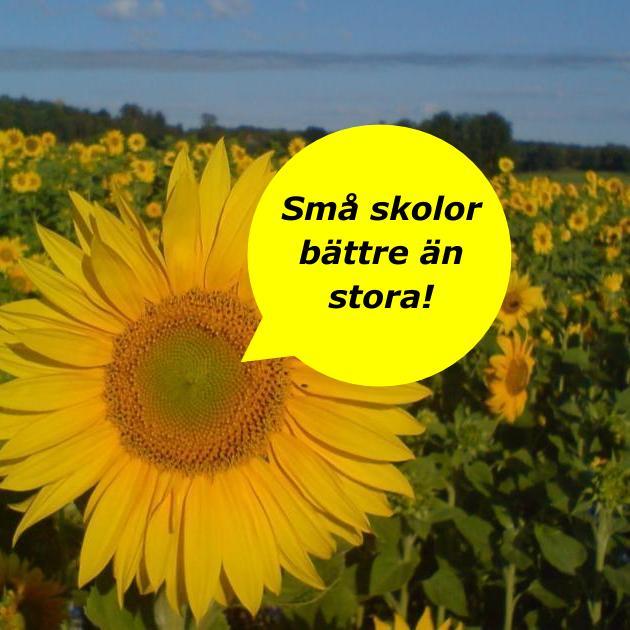 2020-11-11 - Små skolor bättre än stora - Slutsatsen i den här finska forskningsrapporten från 2008 är att den lilla skolan är bättre än den stora.